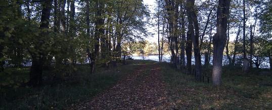 Spruce-island