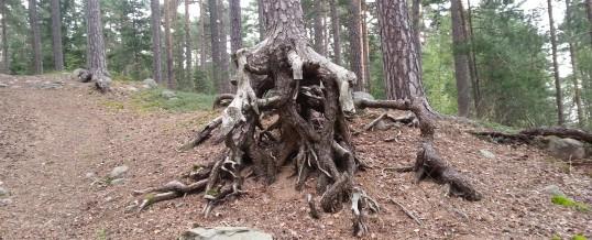 Rastplatsen På Skogen
